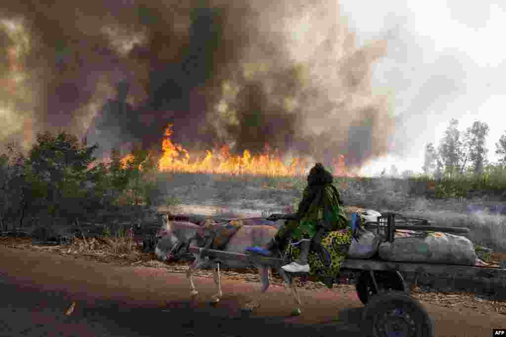 A person drives a donkey cart as a fire burns fields along the road between Sango and Niono in Mali used by Malian and French convoys heading to Diabaly, which was seized last week by Islamists and then heavily bombed by French planes.