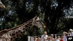 샌디에고 동물원을 버스를 타고 만끽하는 가족들