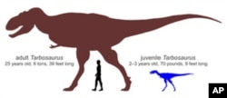 Silhouettes of an adult Tarbosaurus and the newly discovered juvenile, along with a human for scale.