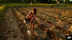 A Cambodian girl takes part to help her family as she sprays water at crop farm near Ang Tasoam town, south of Phnom Penh, file photo. (AP Photo/Heng Sinith)