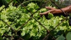 Moçambique pretende empréstimo para produzir produtos horticolas