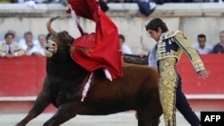 French matador Sebastien Castella performs a muleta pass to a Daniel Ruiz fighting bull, on September 16, 2012 during the Bullfighting wine harvest feria in Nimes, southern France.