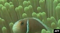 Các bãi san hô lâm nguy