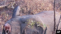One of 200 elephants recently slaughtered in Cameroon by poachers