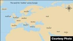 (Click to enlarge) This map shows the distribution of words across Europe for 'mother.' By modeling the evolution of hundreds of such words through time, we can infer relationships between all the languages and trace back to the origin of the family. (Q.D. Atkinson)
