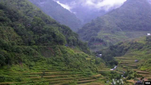 Such mountainside farms have survived for more than 900 years, in part because locals have maintained nearby forests. File photo
