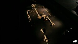 FILE - An exhibit featuring Australopithecus afarensis skeleton called Lucy at the Houston Museum of Natural Science in Houston, Texas, Aug. 28, 2007.