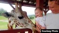 Pengunjung berinteraksi dengan jerapah di Taman Safari Virginia, AS (foto: Facebook).