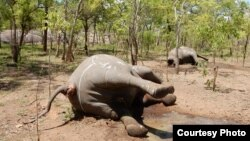 Elefantes continuam a ser mortos em Moçambique