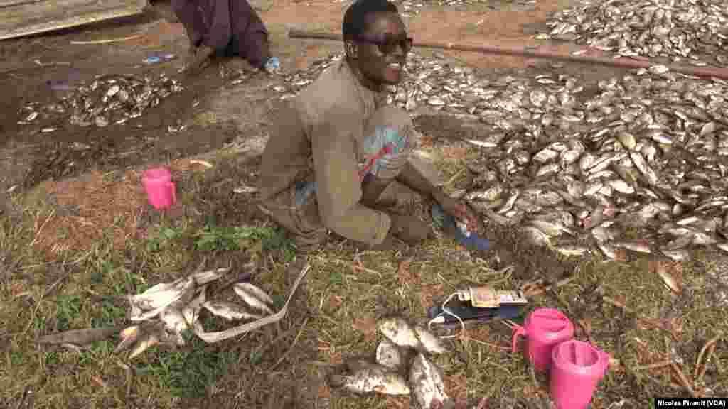 Un pecheur nigerian nettoie les poissons qu'il vient de pecher dans le lac,Tagal, Tchad, le 24 avril 2017 (VOA / Nicolas Pinault)