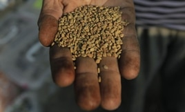 Cameroon's farmers must cope with the rising cost of inputs like seed and fertilzer
