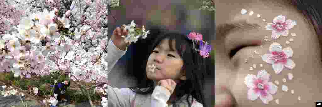 In this combination of photos showing children with cherry blossoms in Tokyo, Beijing, and Seoul, from left to right: A child walks under the blooming cherry blossom trees in Tokyo, March 30, 2017; a child with a cherry flower in her mouth looks at cherry trees at the Yuyuantan Cherry Blossom festival in Beijing, April 2, 2017; a girl's face is painted with cherry flower patterns during the cherry blossom festival in Seoul, April 8, 2017.
