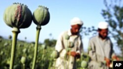 کرزی خواهان کمک بیشتر در مبارزه علیه مواد مخدر شد
