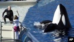 SeaWorld Entertainment Inc. anunció en diciembre de 2016 que eliminaría 320 trabajos a lo largo de los 12 parques de la compañía. La empresa también indicó que ayudaría a desarrollar su primer parque Sea World sin orcas, en Abu Dabi.