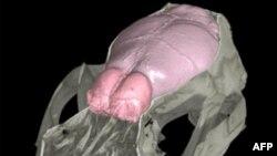 Koku Duygusunun İnsan Evrimindeki Rolüne Dair Yeni Bulgular
