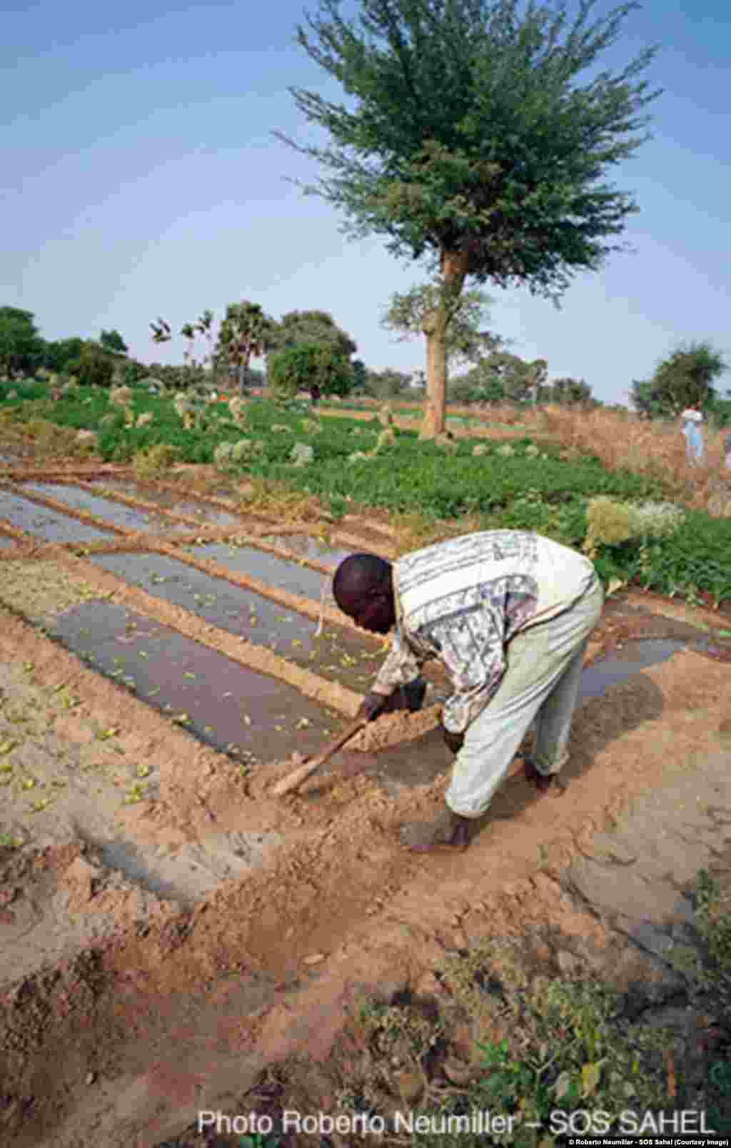 De meilleures pratiques culturales permettent de combattre la désertification