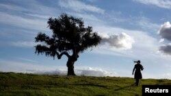 UPS planea alcanzar la meta de plantar dos millones de árboles en cinco continentes, específicamente en bosques y parques nacionales de EE.UU. Europa, Canadá y China, en lo que resta del año.