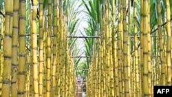 Prodhimi i gjelbër i etanolit në Luiziana