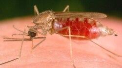 Malaria mata mais de duzentas pessoas no Uige - 1:48