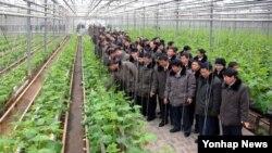북한 전국농업부문 분조장대회 참가자들이 평양남새과학연구소를 방문했다고 조선중앙통신이 3일 보도했다.