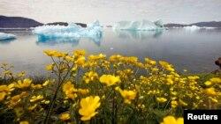 格陵兰岛上的景象