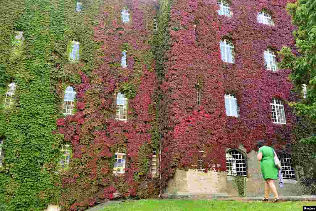 A woman walks past foliage turning from green to red in the grounds of St. John's College in Cambridge, central England.