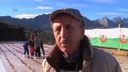 مراسم سال نوی کشاورزی در الجزاير