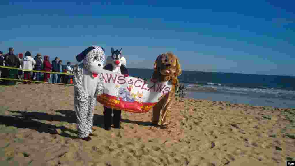 """Decenas de personas desafían el frío y las gélidas aguas del Atlántico, en una """"carrera de pingüinos"""" benéfica en la playa de Ocean City, Nueva Jersey. [Fotos: Mitzi Macías, VOA]."""