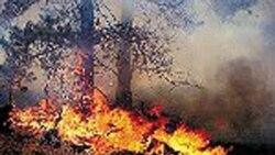 آتش سوزی جنگل گلستان به جنگل های گلوگاه مازندران نیز سرایت کرد