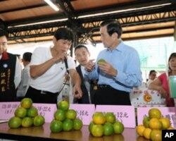 马英九到水果产地视察,并且收购柿子
