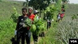 Sejumlah anak muda membawa tanaman Sukun untuk ditanam di lereng Gunung Kelud, Kediri. (Foto: VOA/Petrus Riski)