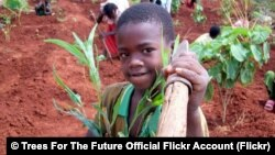 A boy helps to plant trees in Ethiopia.