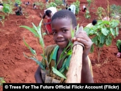 A young boy plants trees in Ethiopia.