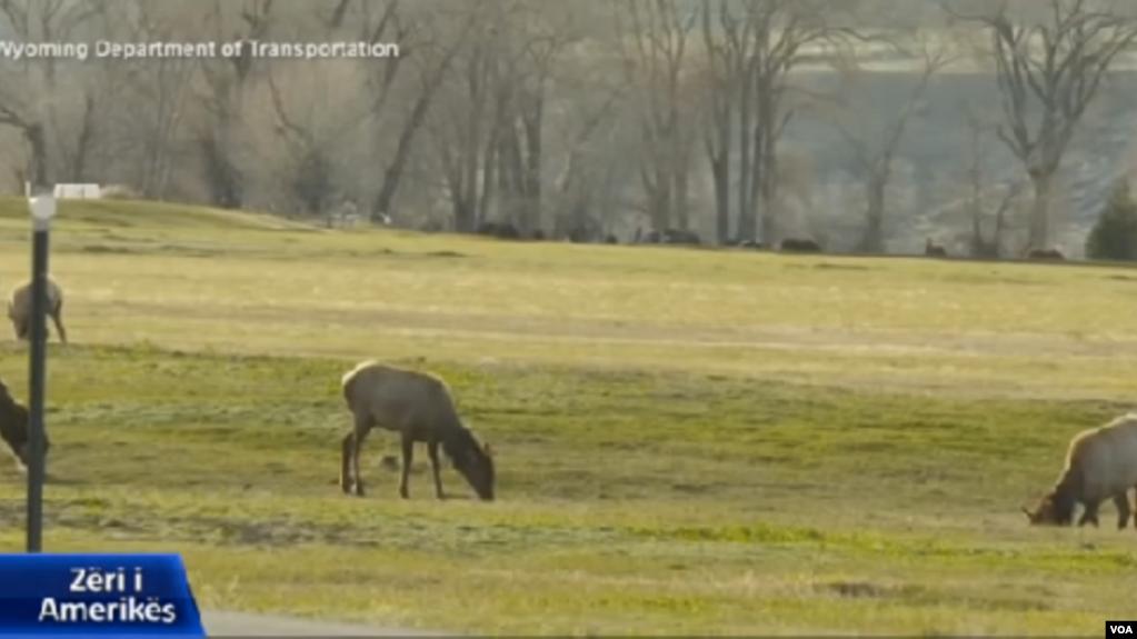 SHBA: Urë për kafshët e egra