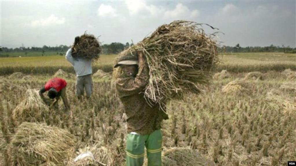 Strategi Pemerintah Untuk Atasi Masalah Pertanian Dinilai Belum Tepat