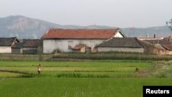 지난 6월 북한 압록강 유역 평안북도 신의주의 한 논에서 농부들이 일하고 있다.