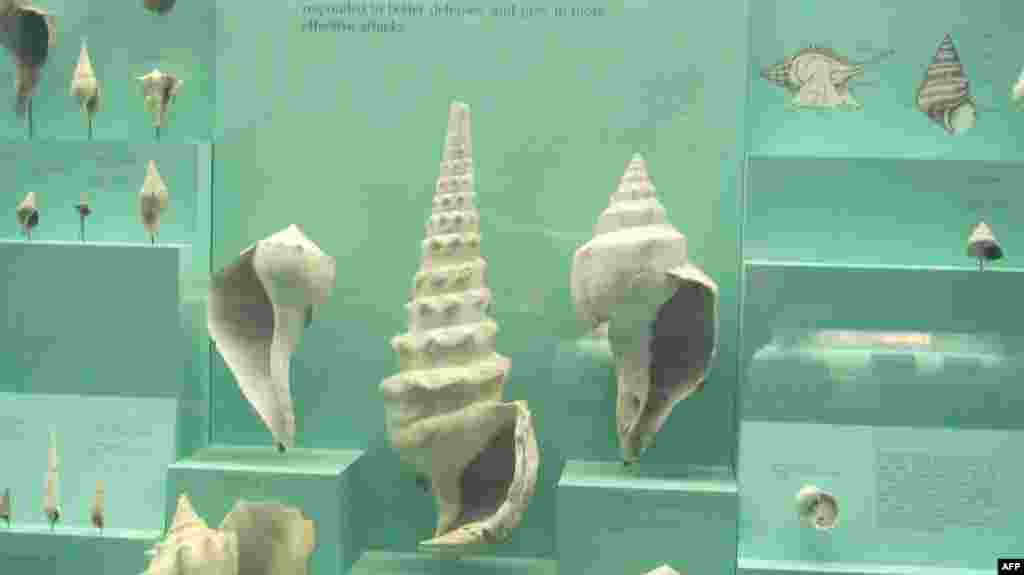 Amerikan Doğa Tarihi Müzesi 2