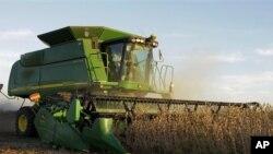 伊利诺伊州农民收割黄豆