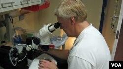 Los científicos están utilizando células madre adultas en los ojos de los peces cebra para restaurarles la visión.