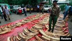 A policeman stands on seized elephant tusks at Makupa police station in Mombasa, Kenya, June 5, 2014.