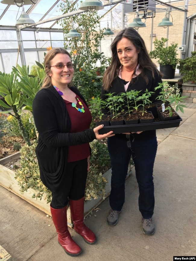 In this February 14, 2019 photo, Jennifer Gilbert Jenkins, left, assistant professor of agriculture at State University of New York, Morrisville, and Kelly Hennigan, who is author of the cannabis minor and chair of the Horticulture Department.