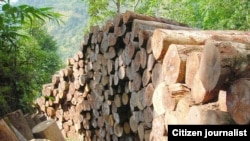 New partnership will fight illegal logging.