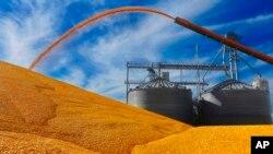 资料照 美国伊利诺伊州的玉米收成