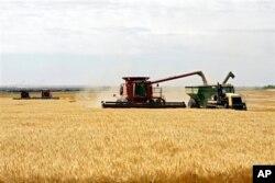 美国中西部的农场收割小麦(资料照片)