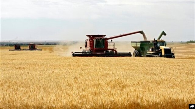 Wheat is harvested on a farm in the midwestern United States, July 2009.