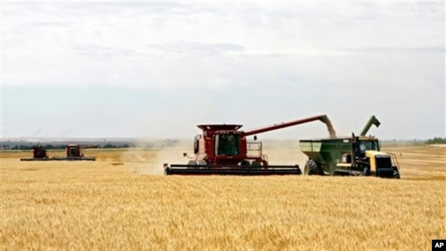 Wheat is harvested on a farm in the midwestern United States, July 2009 file photo.