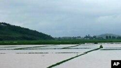 집중호우로 침수된 북한의 농경지