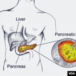 Pankreas adalah kelenjar sepanjang 15 cm yang terselip di belakang lambung dan di bawah hati (foto: ilustrasi).
