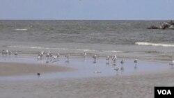 路易斯安那海灘