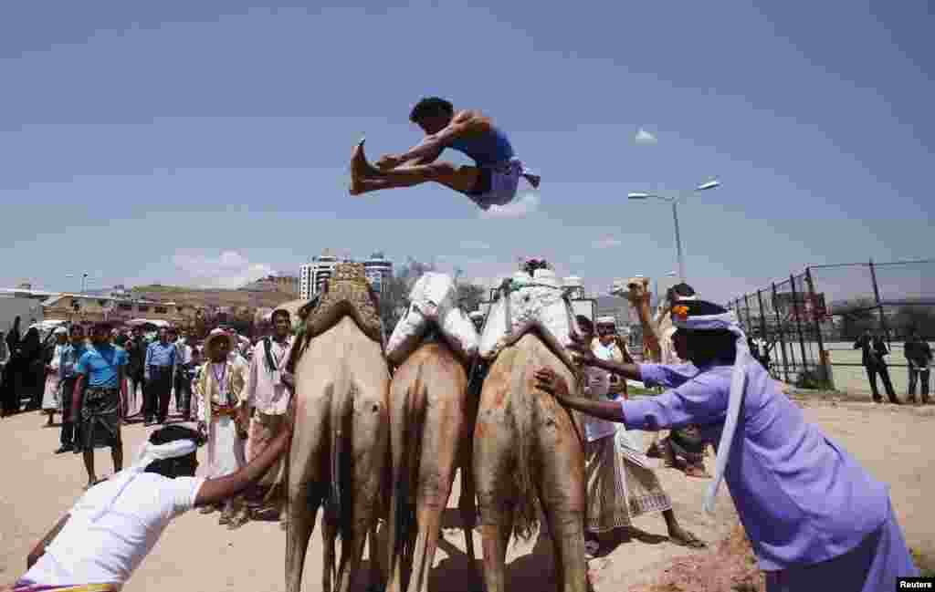 A Bedouin man jumps over camels during the Sana'a Summer Festival in Sana'a, Yemen. The two-week festival aims to stimulate domestic tourism and reassure local and international tourists about Yemen's stability.